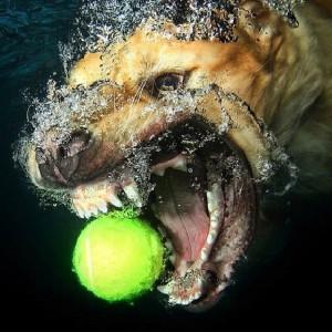 cropped-underwaterdog.jpg